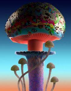 Mushroom Images, Mushroom Pictures, Mushroom Hat, Mushroom Fungi, Mushroom Wallpaper, Poisonous Mushrooms, Broken Glass Art, Plant Fungus, Illusion Art