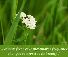 ... emerge from your #nightmare's frequency that you interpret to be beautiful !