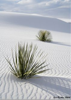 White Sands National Monument in New Mexico - dunes made of white gypsum sand
