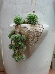 Succulent and Cactus http://ideasondecorating.tumblr.com/post/37488928836/succulent-and-cactus