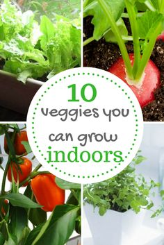Easy vegetables to grow indoors, in an apartment, or in containers! Whoo! Container gardening!