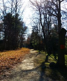 Weekly Photo Challenge: NEW - New Year's Day walk on the Old Aqueduct | Mirth And Motivation