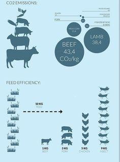 Ces fermes à insectes ultra modernes atteindront-elles leur objectif de vous convaincre de manger de la vermine? | Atlantico.fr