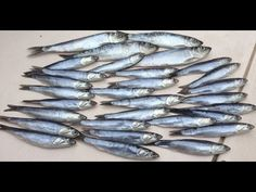 Brining herring before fishing helps toughen the bait and gives it a more vibrant and shiny finish. If your herring is soft and mushy it will fall off the ho. Fishing Tips, Fly Fishing, Best Knots, Fishing Adventure, Salmon Fishing, Rest And Relaxation, Youtube, Fly Tying, Youtubers