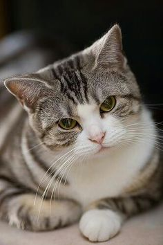 Beautiful tabby cat.