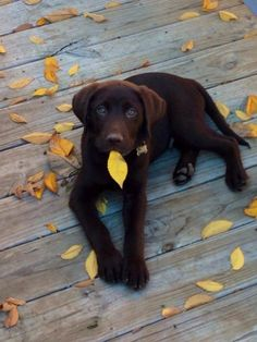 You are cute, you eater of autumn leaves. Looks just like my little guy!