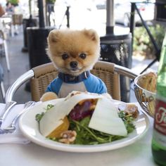 Adorable Dog Is A Foodie On Instagram, Skateboards And Dances Too - DesignTAXI.com