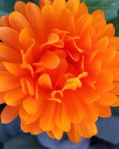 Flower Power! Absolutely love those colors. #prettylook #designer #couture #spring #nature #flower #colors #beauty #goodness #inspiration #love #seasons #orange #amateur #photography #picoftheday #nofilter