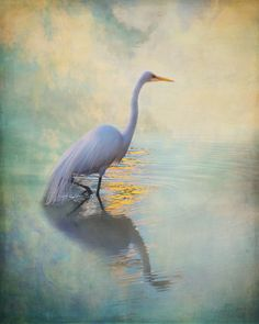Snowy Egret: By Rebecah Thompson
