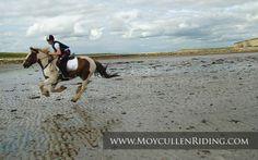 Rusheen Bay, Galway Bay with Moycullen Riding Centre Connemara, Horse Riding, Trekking, Camel, Centre, Horses, Animals, Animais, Animales