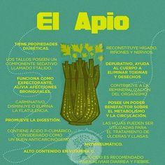 PROPIEDADES DE EL APIO El apio es una planta que se utiliza como alimento pero también tiene propiedades medicinales que lo hacen especial. Las hojas del apio se usan como condimento en muchas comidas o bebidas, cocteles, zumos adelgazantes etc… Y el aceite o líquido interno del apio es extraído y usado con fines medicinales incluso en perfumería.