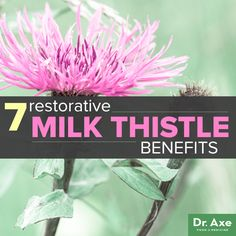 The 2000 year old Milk thistle benefits work by drawing toxins out of the body that can cause a range of symptoms and diseases.