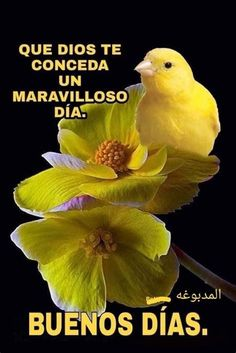 Wish In Spanish, Good Morning In Spanish, Good Morning Funny, Good Morning Friends, Good Morning Messages, Morning Humor, Good Morning Wishes, Night Messages, Happy Day Quotes