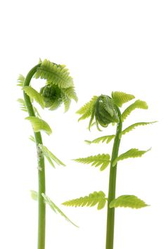ferns | STILL (mary jo hoffman)