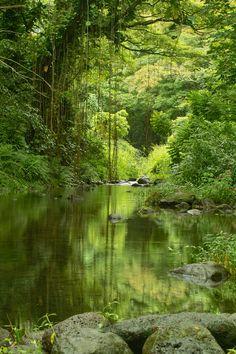 Waipio valley stream, Big Island Hawaii
