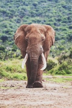 Elephants, they are just so amazing!!