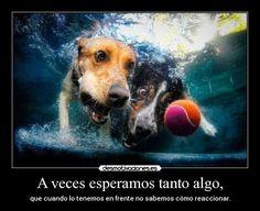 Imagenes De Perros Con Reflexiones