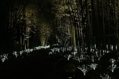 From Bruce Munro's installation at Nashville's Cheekwood. 20,000 Lights Create A Glowing Wonderland | The Creators Project.