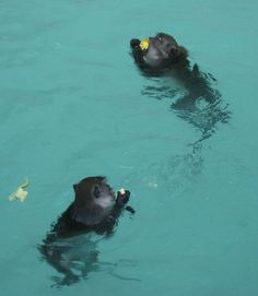 Work Less, Play More: Monkey Beach, Phi Phi Islands