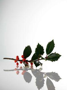'Favorites' in Linda Magazine NL Photography by Frank Brandwijk I 'Holly Sprig' 'Christmas' 'X-Mas'