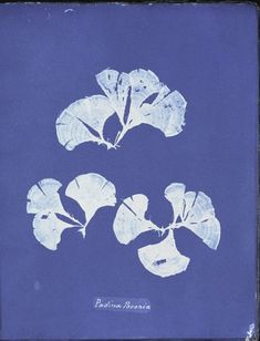 Ocean Flowers by Anna Atkins Ocean Flowers, Frozen Rose, Watermelon Baby, Kinds Of Colors, Language Of Flowers, Queen Annes Lace, Cyanotype, Happy Vibes, Atkins