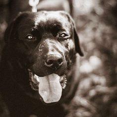 In love. -PH GIuly Ska-  #hope #mydog #labrador #labradorretriever #dog #ilovedogs #portrait #portraits #animalportrait #pet #beutiful #beauty #black #dark #pic #picture #picoftheday #photo #photography #photographer #giulyska #insta #indtamood #instapic #instagood #instanimal #instagram #instadaily #followme