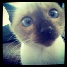 Cat, Mulan :(