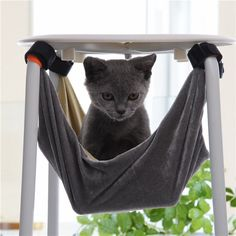 MARBOL Pet Kitten Cat Hammock Removable Velcro Hanging Soft Bed Cages for Chair Kitty Rat Small Pets Swing ** Read more at the image link. (This is an affiliate link and I receive a commission for the sales)