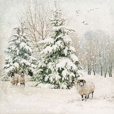 Fir Tree Sheep - Bug Art greeting card