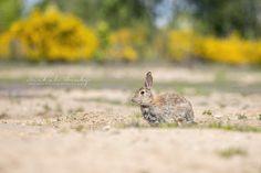 Rabbit, Animals, Instagram, Bunny, Rabbits, Animales, Animaux, Bunnies, Animal