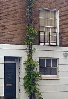 Wisteria covering a drainpipe Wisteria, Garden Plants, Garage Doors, New Homes, Victorian, Exterior, Outdoor Decor, House, Home Decor