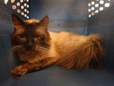 Adoptable Animals - Cats | Edmonton Humane Society