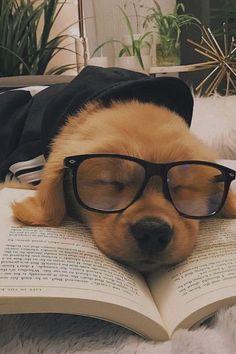 Super Cute Puppies, Baby Animals Super Cute, Cute Baby Dogs, Cute Little Puppies, Cute Funny Dogs, Cute Dogs And Puppies, Cute Funny Animals, Cute Babies, Doggies