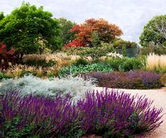 Give your garden a truly local feel with a thoughtful selection of sculptural, colourful and hardy natives.