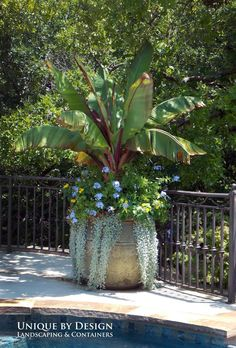 Discover this container gardening pin 5401829474 to consider now. Outdoor Flowers, Outdoor Planters, Garden Planters, Outdoor Gardens, Tropical Landscaping, Tropical Garden, Garden Landscaping, Landscaping Ideas, Container Flowers