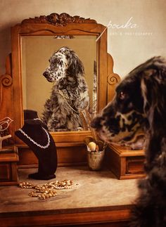 """The Two Sides of Sparrow"". Award-winning photograph of an English Setter. Pouka Fine Art Pet Portraits. www.pouka.com"