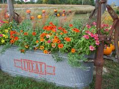 Hawk Valley Garden..my old water trough full of zinnia, catmint and grasses