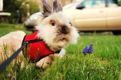 Botanist Bunny Gives You a Tour of the Yard and Its Plants - August 19, 2011