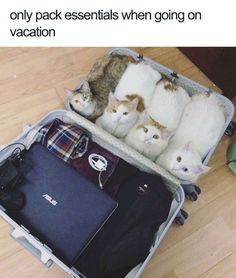 This is funny. I have a recurring dream about going on a trip and packing my cats in the suitcases. PurritoCat