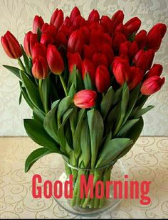 New Flowers Red Tulips Ideas Red Tulips, Tulips Flowers, All Flowers, Pretty Flowers, Spring Flowers, Tulip Seeds, Flower Seeds, Tulip Bouquet, Tulip Bulbs