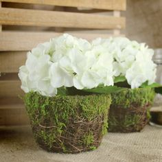GorgeousWhite Hydrangea in a moss covered flower pot. This artificial arrangement is perfect for wedding tables for a country, garden or rustic theme. Measure
