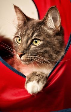 """""""Every cat has 9 lives--3 for playing, 3 for straying, 3 for staying."""" --English Proverb"""