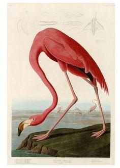 flamingo giclee