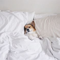 "Me: ""Do I really need to get out of bed in this weather?""⠀ ⠀ Also Me: ""Yep. Got bills to pay.""⠀ ⠀ Good thing you can manage your time and be your own boss with us at Phenix Salon Suites! Animals And Pets, Baby Animals, Funny Animals, Cute Animals, Cute Corgi, Corgi Dog, Dog Cat, Puppies And Kitties, Cute Puppies"