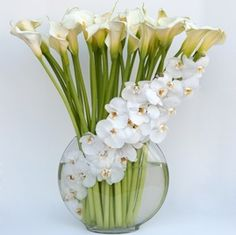 on A visually stunning orchid arrangement featuring Calla lilies.A visually stunning orchid arrangement featuring Calla lilies. Orchid Arrangements, Beautiful Flower Arrangements, Fresh Flowers, White Flowers, Beautiful Flowers, White Orchids, Contemporary Flower Arrangements, Cymbidium Orchids, White Lilies