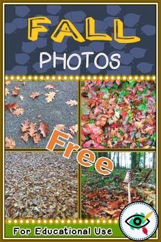 FREE! NEW! Use our Fall photographs for your educational, visual use; Lesson plans, activities, bulletin boards, backgrounds presentions, titles, class decor and more. Winter photos are waiting for you too!  #fallphotos #teachers #homeschooling #freefallphotos #freephotos #homeschooling #fall #autumn #fallleaves #leaves Teachers Pay Teachers Freebies, Teacher Freebies, First Grade Teachers, Fall Season Pictures, Winter Photos, Math Websites, Teacher Websites, September Activities, Autumn Activities