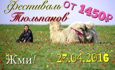 image-02-04-16-12-11