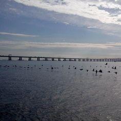 Imagens da Baía de Guanabara durante a expedição de monitoramento da qualidade de água da BG... Foto: @mariannepataro  #aboutrio #agua #analisedeagua #baiadeguanabara #brindeaorio#cariocandonorio #desbravandorio #errejota #eusoubg #eusourio #guanabara #guanabarabay #labhidroufrj #porainorio #praiario #praiarioapp #registrosdorio #riodejaneiro #rioeuamoeucuido #ufrj #universorio #visitrio #wanderlust #momentobg