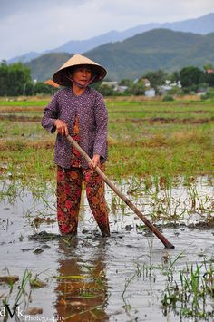 Vietnam Rice Field 1 by dVk Photography Hanoi Vietnam, Vietnam Travel, Brunei, Laos, Timor Oriental, Vietnam History, World Photography, Ho Chi Minh City, People Of The World