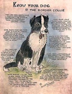 I love my blaze Collie Puppies, Collie Mix, Dogs And Puppies, Doggies, Border Collie Training, Border Collie Facts, Collie Breeds, Dogs With Jobs, Dog Facts